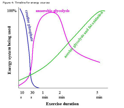Cardio Is No Longer King The Kelsey Report